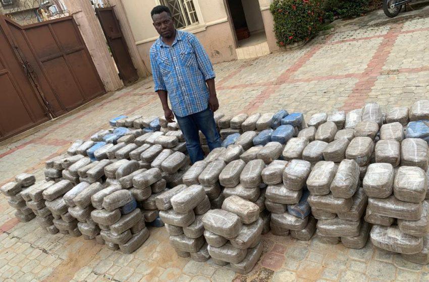 Nigeria's NDLEA intercepts 487kg of cannabis at Jetty, bursts cartels